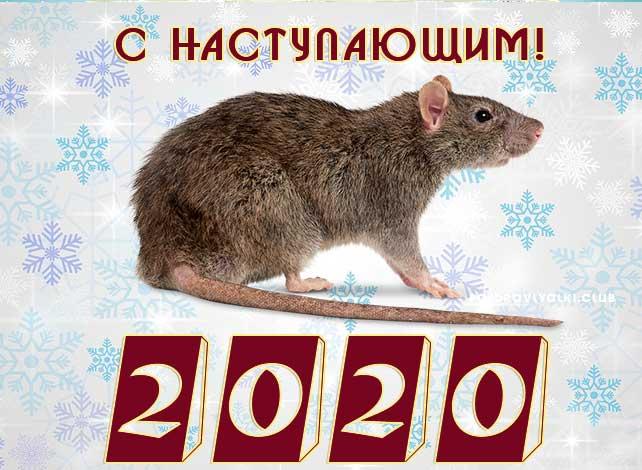 с-наступающим-новым-годом-2020-крыса-открытка